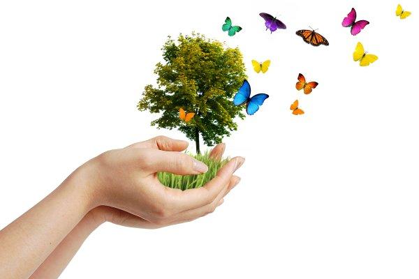 Αποτέλεσμα εικόνας για Παγκόσμια Ημέρα Περιβάλλοντος 2017: «Σύνδεση με τη Φύση»
