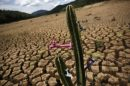 "A drought-related cactus installation called ""Desert of Cantareira"" by Brazilian artist and activist Mundano is seen at Atibainha dam, part of the Cantareira reservoir, during a drought in Nazare Paulista, Sao Paulo December 2, 2014. Sao Paulo, Brazil's drought-hit megacity of 20 million, has about two months of guaranteed water supply remaining as it taps into the second of three emergency reserves, officials say.  REUTERS/Nacho Doce (BRAZIL - Tags: DISASTER ENVIRONMENT SOCIETY TPX IMAGES OF THE DAY)"